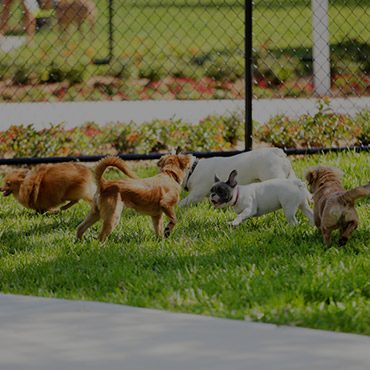Large Dog Park at Mulberry Park Apartments